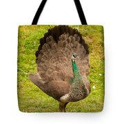 A Peahen's Plumage Tote Bag