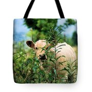Peek A Boo Tote Bag by Jan Amiss Photography