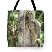 Peek-a-boo Sloth Tote Bag