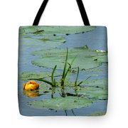 Peeking Up Tote Bag