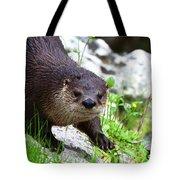 Peering Otter Tote Bag