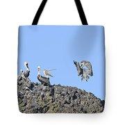 Pelican Landing On A Rock Tote Bag
