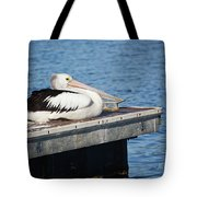Pelican Taking Time Out 691 Tote Bag