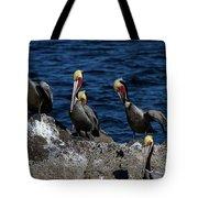 Pelicanos Tote Bag