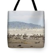 Pelicans And Gulls Tote Bag