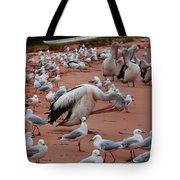 Pelicans At Pearl Beach 3.0 Tote Bag