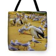 Pelicans At Pearl Beach 3.1 Tote Bag