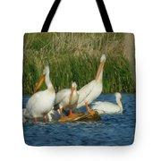 Pelicans Being Pelicans Tote Bag