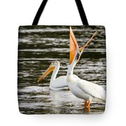 Pelicans Fishing Tote Bag