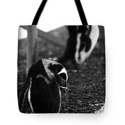 Penguins Under The Boardwalk Tote Bag