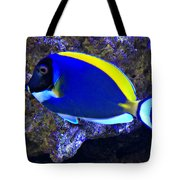 Blue Tang Fish  Tote Bag
