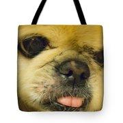 Pensive Pup Tote Bag