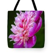 Peonie Debut Tote Bag