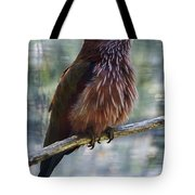 Perched - 1 Tote Bag