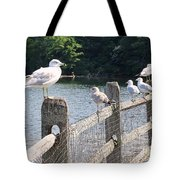 Perched Gulls Tote Bag