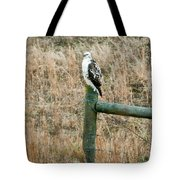 Perched Hawk Tote Bag by Douglas Barnett