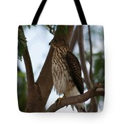 Perched Hawk Tote Bag