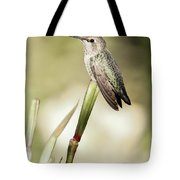 Perched Hummingbird On Flower Tote Bag