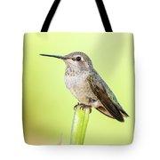 Perched Hummingbird Vi Tote Bag