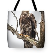 Perched Juvenile Eagle Tote Bag