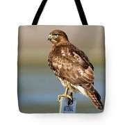 Perched Red Tail Hawk Tote Bag