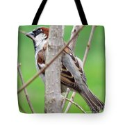Perching Sparrow Tote Bag