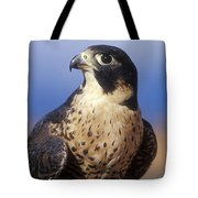 Peregrine Falcon Tote Bag by Sandra Bronstein