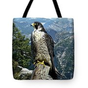 Peregrine Falcon, Yosemite Valley, Western Sierra Nevada Mountain, Echo Ridge Tote Bag