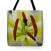 Perfect Beauty Tote Bag