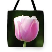 Perfect Pastel Pink Flowering Tulip Blossom In Spring Tote Bag