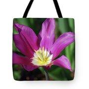 Perfect Single Dark Pink Tulip Flower Blossom Blooming Tote Bag