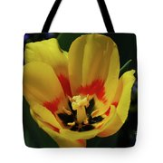 Perfect Yellow And Red Flowering Tulip In A Garden Tote Bag