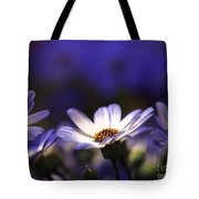 Pericallis On A Cool Spring Evening 4 Tote Bag