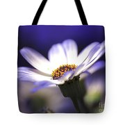 Pericallis On A Cool Spring Evening Tote Bag