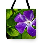 Periwinkle At Pilgrim Place In Claremont-california Tote Bag