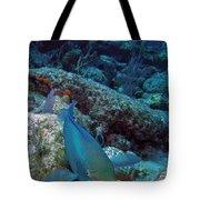 Perky Parrotfish Tote Bag