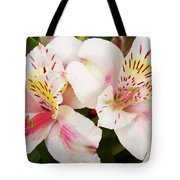 Peruvian Lilies  Flowers White And Pink Color Print Tote Bag