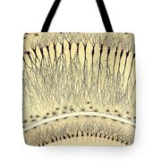 Pes Hipocampi Major Santiago Ramon Y Cajal Tote Bag