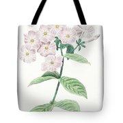 Phlox Acuminata Tote Bag