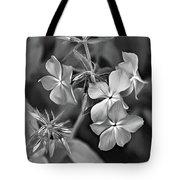 Phlox Divaricata Bw Tote Bag