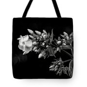 Phlox In Black And White Tote Bag