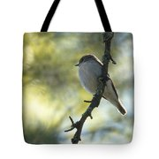 Pied Flycatcher 1 Tote Bag