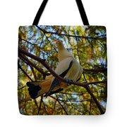 Pied Imperial Pigeon Tote Bag