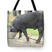 Pig Eating From A Bucket Tote Bag