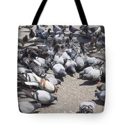Pigeons Are Eating Forage  Tote Bag
