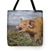 Piglet Eating Hay Tote Bag