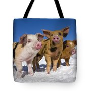Piglets In Snow Tote Bag