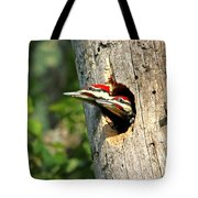 Pileated #29 Tote Bag