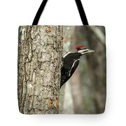 Pileated Searching - Looking Tote Bag
