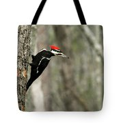 Pileated Woodpecker Looking For A Perspective Mate Tote Bag